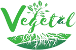 Vegetal Ethnic Foods Market